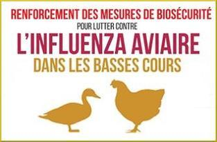 Protection des elevages elevation du niveau de risque de l influenza aviaire h5n8 large